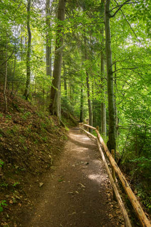 path through forest. wonderful nature scenery in summertime. sunny weather in the forenoon. great place for outdoor activities Stock Photo