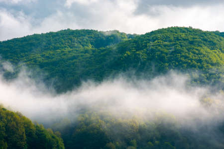 forest in the morning mist. beautiful nature scenery in summer season. green nature background in dramatic weather Stock Photo