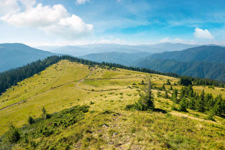 carpathian mountain landscape in summertime. beautiful countryside scenery with trees on the grassy alpine meadows. sunny morning with fluffy clouds on the sky Stock Photo