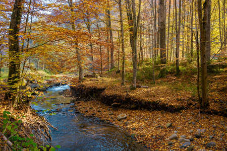 mountain river in the forest. beautiful autumn landscape with trees in colorful foliage. nature scenery in morning light