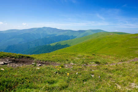 grassy hills and meadows of Borzhava mountain ridge. wonderful summer landscape at high noon. high clouds on the blue sky. wonderful nature scenery of carpathians Stock Photo