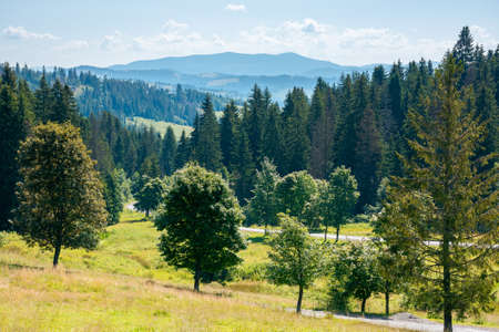 mountainous countryside in summer landscape. trees on the meadow along the road. coniferous forest on the hills. bright sunny forenoon scenery with clouds on the sky
