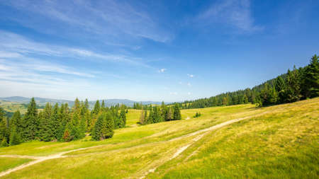 forested hill of carpathian mountains. trail through the meadow. sunny evening with blue sky above the distant ridge