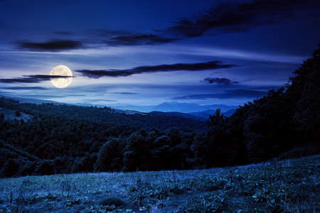 countryside landscape of carpathians at night. green meadow under dark sky in full moon light. trees on the hill Stock Photo