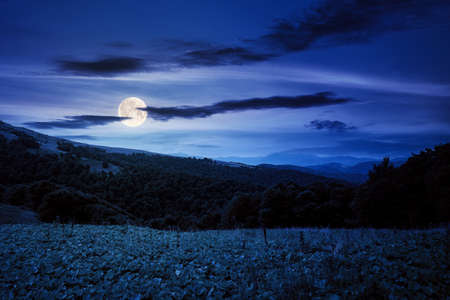 beautiful ukrainian countryside at night. grassy meadows and hills under dark sky. trees on the hill in full moon light