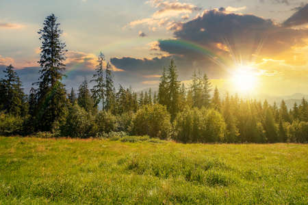 spruce forest on the grassy hillside at sunset. beautiful nature scenery in mountains. summer landscape with dramatic sky above the distant ridge in evening light. explore backcountry concept