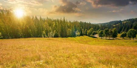 mountainous countryside panorama at sunset. trees on the meadow along the road. coniferous forest on the hills in evening light. bright sunny afternoon scenery with clouds on the sky in summertime
