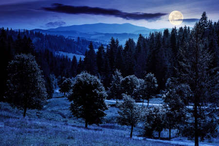mountainous countryside landscape at night. trees on the meadow along the road. coniferous forest on the hills in full moon light. dark mysterious scenery with clouds on the sky in summer