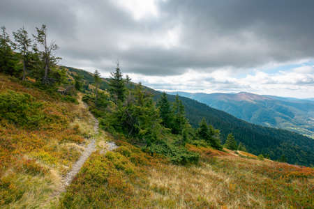 mountain landscape in dramatic weather. beautiful carpathian countryside in autumn. coniferous trees on colorful grassy meadows in dappled light. rural valley in the distance. cloudsy on the sky