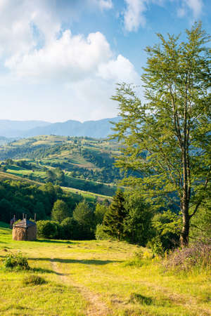 rural landscape in morning light. wonderful countryside scenery of carpathian mountainsin summer. trees, fields and haystack on the hills. bright blue sky with fluffy clouds above the distant ridge