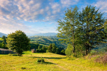 rural landscape in morning light. wonderful countryside scenery of carpathian mountainsin summer. trees, fields and meadows on the hills. bright blue sky with fluffy clouds above the distant ridge Stock Photo