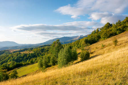 rural landscape in evening light. beautiful countryside scenery of carpathian mountains. trees, fields and meadows on the hills. september sky with fluffy clouds