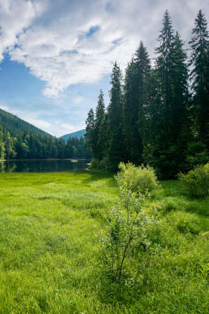 landscape with lake of synevyr national park. beautiful summer scenery of carpathian mountains. popular travel destinations of ukraine. stunning environment among coniferous forest on a sunny day with clouds on the sky Stock Photo