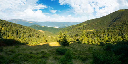 beautiful mountain landscape in morning light. coniferous forest on the steep hills. wonderful summer scenery of carpathians with gorgeous cloudscape on the blue sky