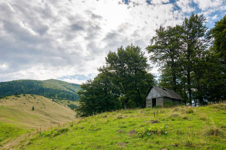 countryside landscape of carpathian mountains in ukraine, europe. green meadow under blue sky. trees on the hill