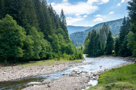 mountain river runs through forested valley. countryside scenery on a summer day. trees and stones on the shore. ecology problem with low ammount of water. stream shallowing or drought concept