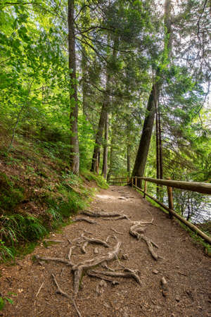 trail through forest. beautiful nature scenery in summer. wonderful sunny weather. great day for a walk Stock Photo