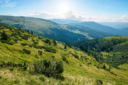 carpathian mountain landscape on a bright forenoon. beatiful scenery with green rolling hills beneath a fluffy clouds on a blue sky in summer. popular travel destination of chornohora ridge