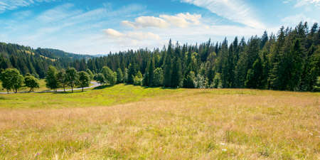 mountainous countryside in summer panorama. trees on the meadow along the road. coniferous forest on the hills. bright sunny forenoon scenery with clouds on the sky