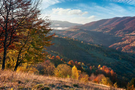 mountainous countryside in morning light. beautiful autumn scenery with trees in colorful foliage and rural fields on hills rolling in to the distant ridge beneath a bright blue sky with fluffy clouds Stock Photo