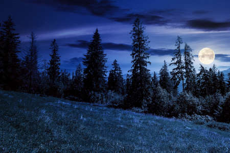 spruce forest on the grassy hillside at night. beautiful nature scenery in mountains. summer landscape with dark sky above the distant ridge in full moon light. explore backcountry concept