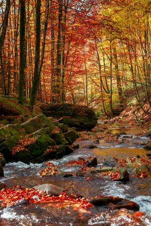 autumn scenery with river. beautiful nature landscape in autumn season. stones and trees in colorful foliage on the shore of rapid flow. bright sunny weather