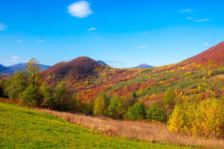 autumnal landscape in carpathian mountains. trees in colorful foliage on a grassy hills rolling in to the distant ridge. beautiful scenery on a warm sunny day with clouds on the sky Stock Photo