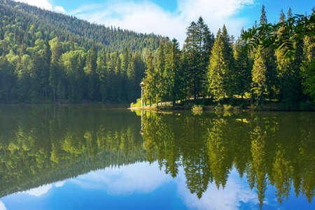 lake of synevyr national park at sunrise. gorgeous summer scenery of carpathian mountains reflecting in the water. popular travel destinations of ukraine. stunning environment among coniferous forest in morning light with clouds on the sky
