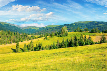 countryside summer landscape. meadows, pastures and forest on the hills. mountainous scenery on a bright summer day. gorgeous cloudscape above the ridge