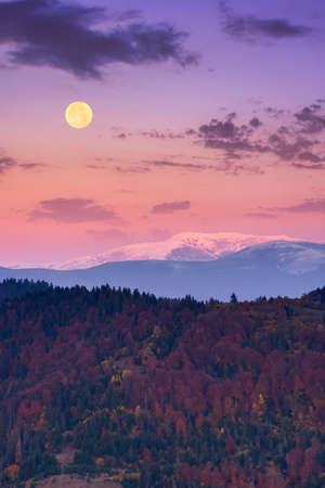 moon rise above snow covered ridge. wonderful autumn landscape of carpathian mountains in late autumn. nature scenery at twilight