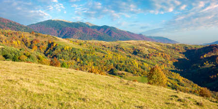 carpathian mountains countryside in evening light. trees in colorful foliage on hills and grassy meadow. ridge in the distance under the bright sky with clouds