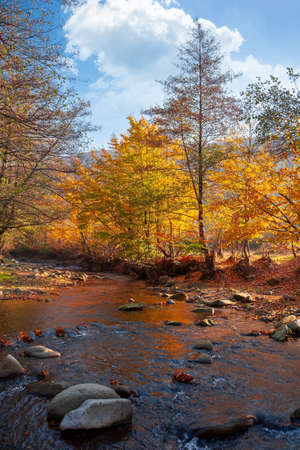 autumn landscape with river. beautiful countryside scenery at sunrise. stones in the water and trees in yellow foliage on the shore. clouds on the blue morning sky Stock Photo