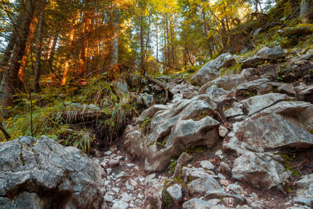 steep path through ancient forest. rocks and roots on the ground. autumn season in apuseni natural park, romania