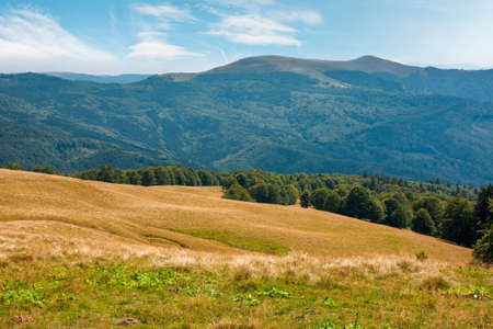 summer mountain landscape with forest on the hill. primeval beech trees on a grassy slopes of svydovets ridge. beautiful nature scenery of carpathians on a sunny day with clouds on the sky Stock Photo