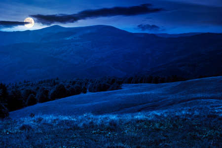beech trees on the hill at night. empty alpine meadow with dry grass in full moon light. countryside landscape of carpathian mountains in august