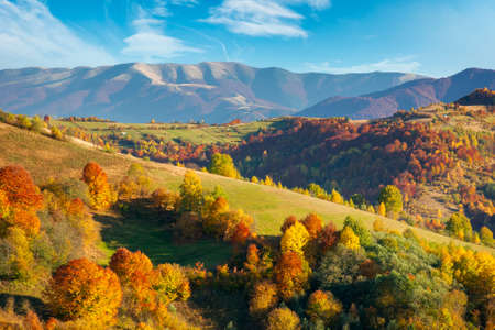 autumnal countryside of carpathian mountains. beautiful landscape in evening light. trees in colorful foliage and fields on rolling hills. ridge in the distance beneath a clouds on the sky