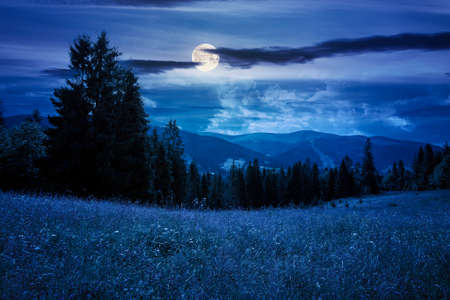 mountain landscape with meadow and forest at night. beautiful countryside scenery in summertime. coniferous trees on the grassy slope in full moon light Stock Photo