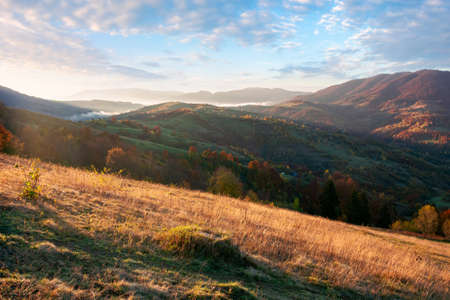 carpathian rural landscape at sunrise. trees in colorful foliage on grassy rolling hills. beautiful mountain scenery in autumn. bright sunny weather