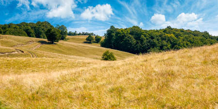 beech trees on the hill. empty alpine meadow with dry yellow grass. sunny weather with blue sky. countryside landscape of carpathian mountains in august Stock Photo