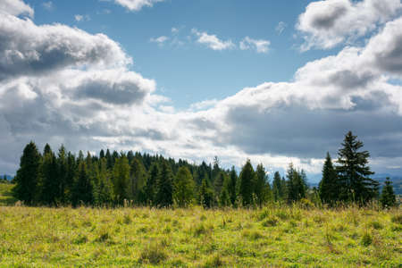 mountainous countryside in early autumn. trees and grassy meadows on rolling hill. nature scenery with dramatic sky on a sunny day. windy weather and dappled light Stock Photo