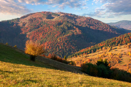 autumnal mountain landscape in evening light. beautiful carpathian countryside in fall colors. grassy hills rolling in to the distant ridge beneath a gorgeous sky with clouds