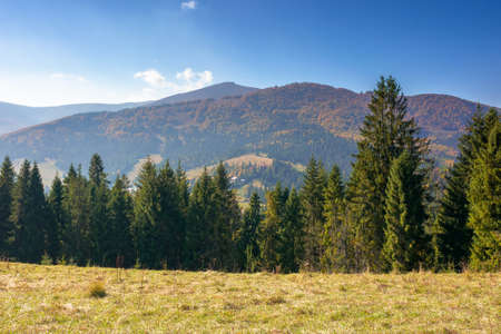 landscape with coniferous forest on the hill. beautiful nature scenery on a bright sunny morning. wonderful carpathian mountain landscape in autumn with clouds on the sky Stock Photo