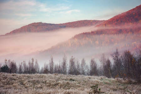autumnal countryside scenery on a foggy morning. trees in colorful foliage. blue sky with clouds. weathered grass in hoarfrost