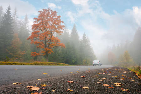 new asphalt road through forest. wonderful autumn scenery. low visibility on the road in foggy weather condition