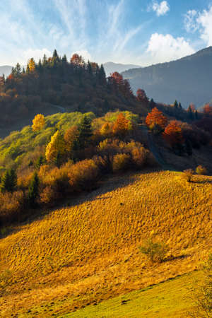 mountain landscape in autumn. trees in colorful foliage on the grassy hills. ridge in the distance beneath a sky with gorgeous clouds. beautiful nature scenery in evening light