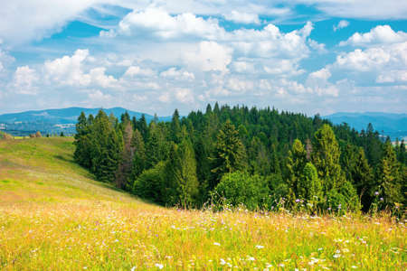 forest on the meadow beneath a clouds on the sky. beautiful outdoor background of carpathian countryside in summer Stock Photo