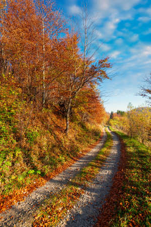 country road through forest in mountains. trees in colorful foliage in morning light. sunny weather with clouds on the sky above the distant ridge Stock Photo