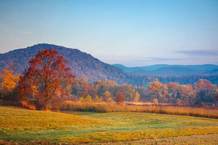 autumnal rural landscape at sunrise. beautiful mountainous countryside in late autumn season. empty fields. trees in red and orange foliage. hazy atmosphere