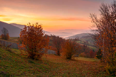 rural landscape at sunrise. beautiful autumnal mountain scenery. trees in fall foliage and wooden fence on the grassy hillside meadow. agricultural fields on the distant rolling hills