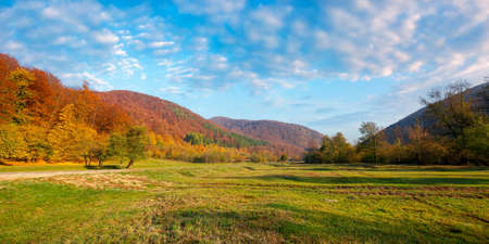 countryside valley on autumn morning. panoramic scenery of carpathian mountains with forest in colorful foliage. green grassy meadow. blue sky with clouds Stock Photo